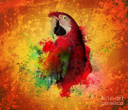 Paint Splatters of Maccaw Parrot by Angela Waye