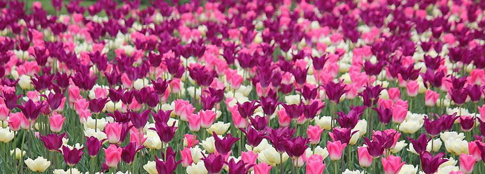 Rosanne Jordan - Paint Your Walls With Tulips