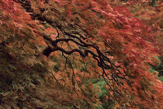 Wes and Dotty Weber - Painted Cascading Japanese Maple
