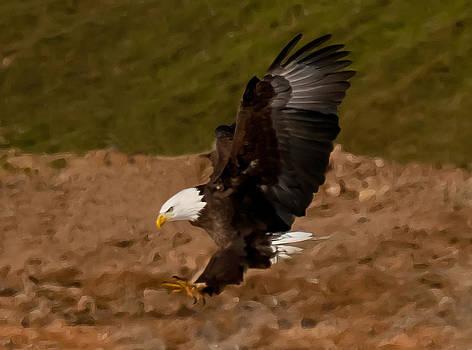 Lara Ellis - Painted Eagle