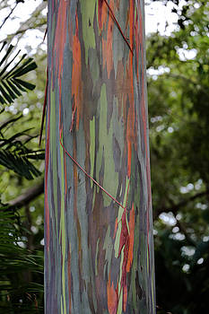 Painted Eucalyptus tree by Sam Amato