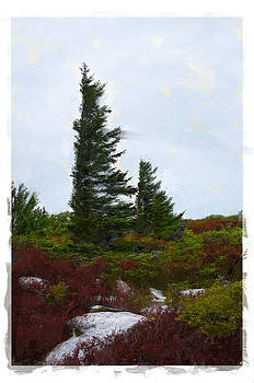 Painted Flagstaff by Diana Boyd