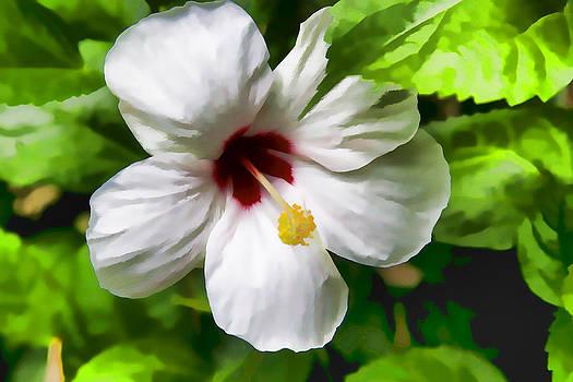 Bonnie Davidson - Painted Hibiscus