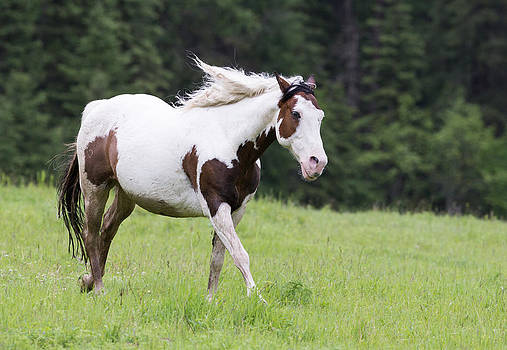Dee Carpenter - Painted Horse