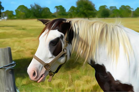 Painted Horse Portrait by Ronald T Williams