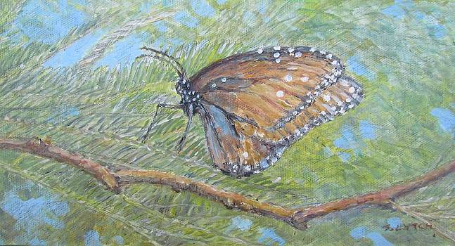 Painted Lady by Sandra Lytch