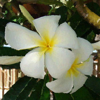 Painted Plumeria by DM Photography- Dan Mongosa