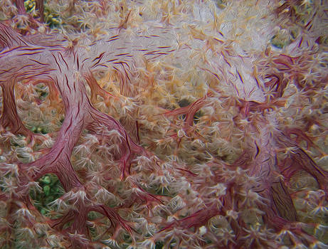 Painted Soft Coral by Terry Cosgrave