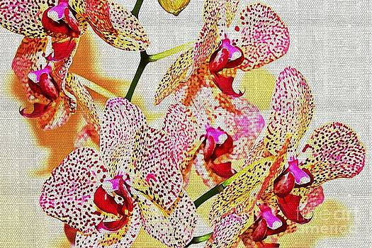 Painted Spotted Orchid by Judy Palkimas