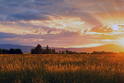 Painted Sunset by Dana Moyer