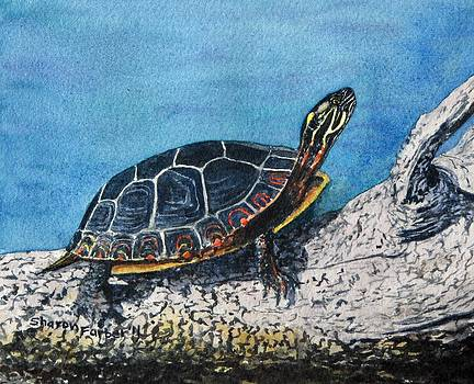Painted Turtle IV by Sharon Farber