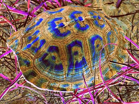 Painted Turtle by Stephen Sherouse