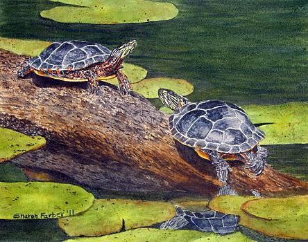 Painted Turtles by Sharon Farber