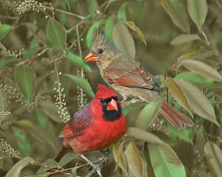 Pair of Cardinals by Helen Ellis