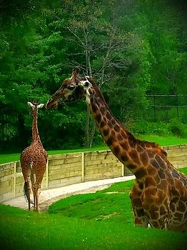 Pair of Giraffes by Ted Mahy