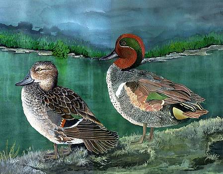 Pair of Green-winged teals by Marsha Friedman