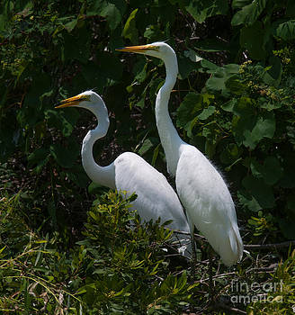 Dale Powell - Pair of Herons