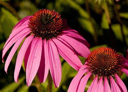 Devinder Sangha - Pair of Purple flowers