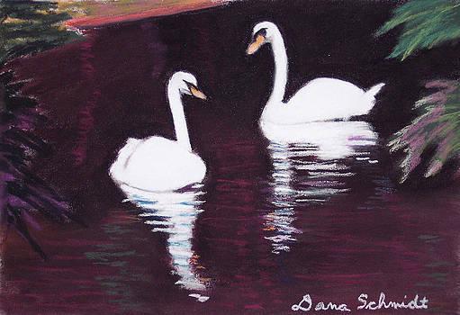 Pair of White Swans Swimming by Dana Schmidt