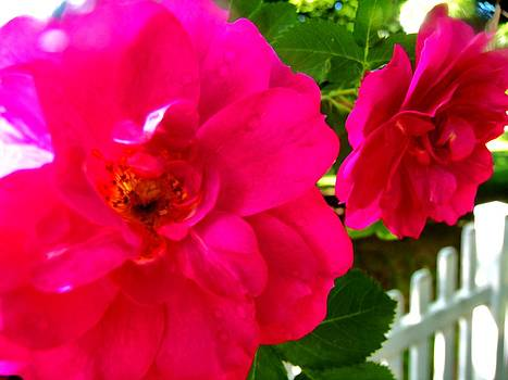 Pair of wild roses by Mark Malitz