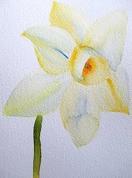 Pale Yellow Daffodil by Sacha Grossel