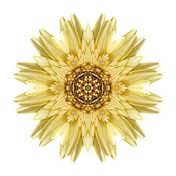 Pale Yellow Gerbera Daisy I Flower Mandala White by David J Bookbinder