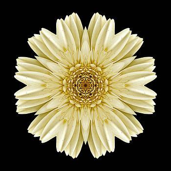 Pale Yellow Gerbera Daisy III Flower Mandala by David J Bookbinder