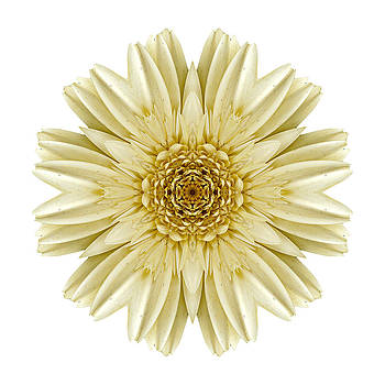 Pale Yellow Gerbera Daisy III Flower Mandala White by David J Bookbinder