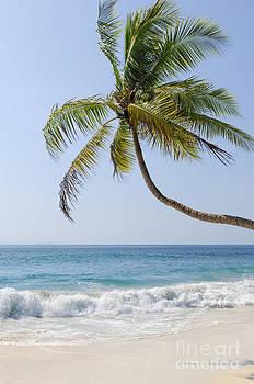 Oscar Gutierrez - Palm and Beach