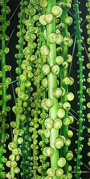 Palm Berries by Urszula Dudek
