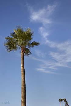Palm by Cindy Moleski
