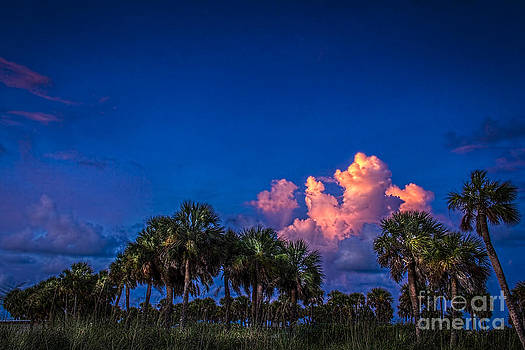 Palm Clouds by Marvin Spates