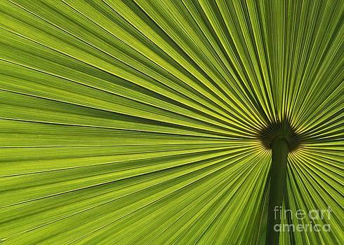 Sabrina L Ryan - Palm Fron Abstract