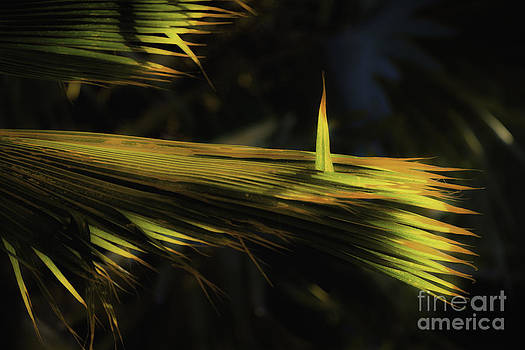 Palm Frond at Attention by Richard Mason