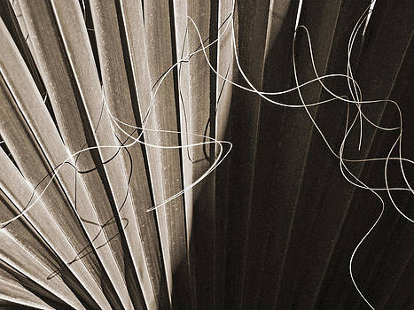 Connie Fox - Palm Frond BW Sepia Abstract