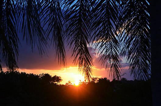 Palm Horizon by Laura Fasulo