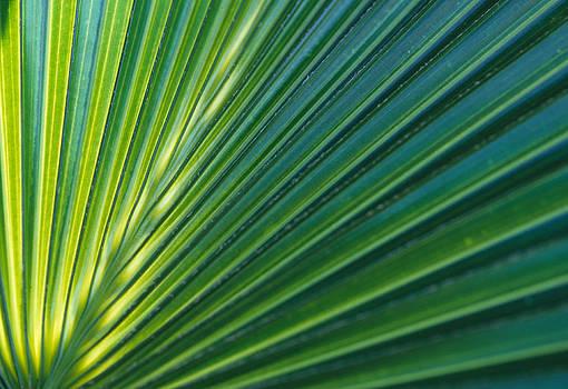 Harold E McCray - Palm I