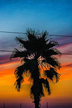 Palm in the Sunset by Jason Brow
