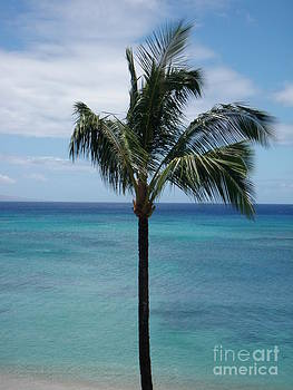 Palm In The Wind by Dean Gribble