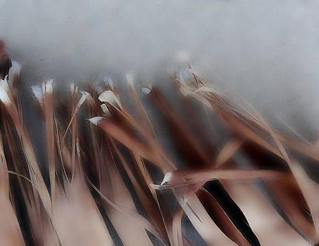 Palm leaf by Eileen Shahbazian