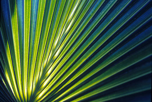 Harold E McCray - Palm leaf