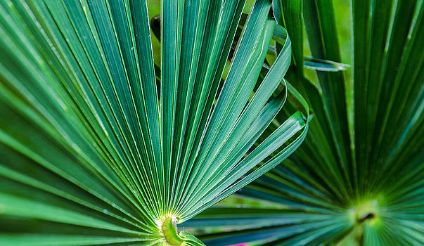 Palm leafs. by Slavica Koceva
