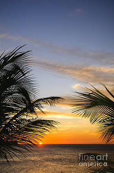 Oscar Gutierrez - Palm Leaves and Tropical Sunset