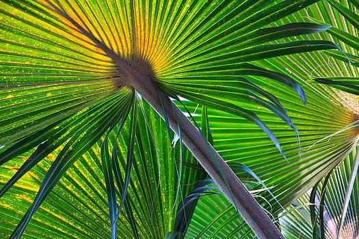 Palm leaves by Esther Branderhorst