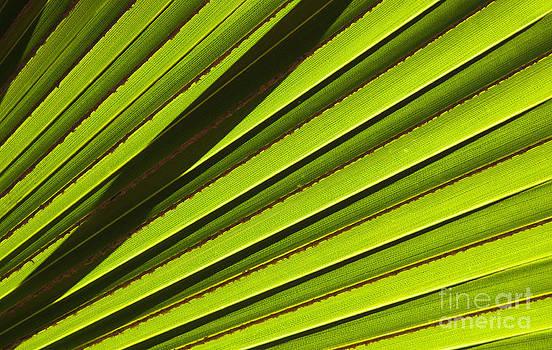 Mike  Dawson - Palm Lines