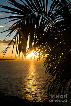 Palm Paradise by A New Focus Photography