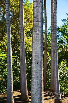 Jamie Pham - Palm Pillars