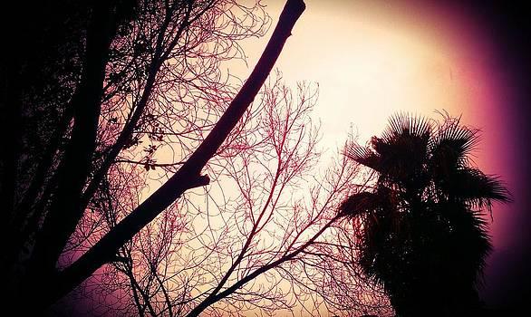 Palm by Santana Wilson