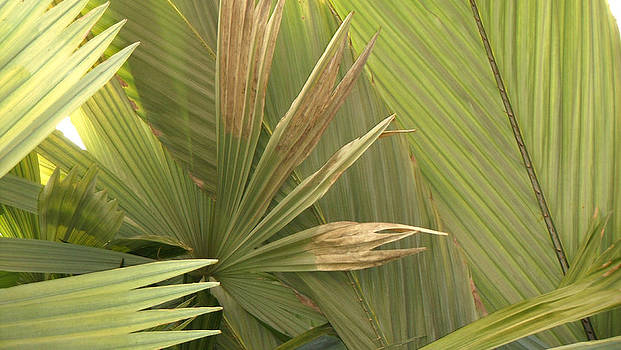 Palm Series I by Rosie Brown