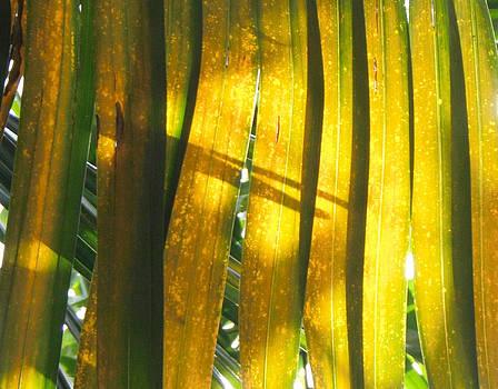 Palm Series II by Rosie Brown